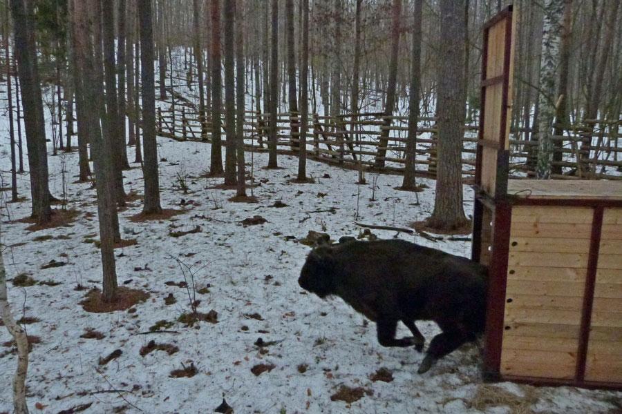 Погода в абхазии цандрипш на завтра